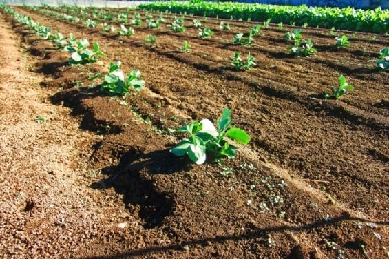SEO対策_リライトの仕方_ブログは農業である